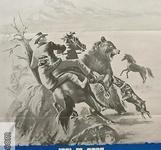 Vildhästen